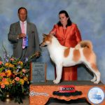 Laila a Ch. Ego X Ch. Moxie treated like a queen by Mike & Donna Bennett at Liberty Akita's in OK.