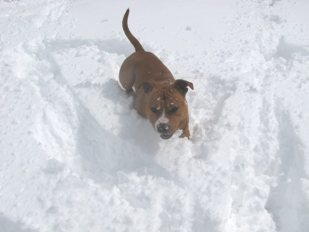 Rocky in the spring snow 2013 008