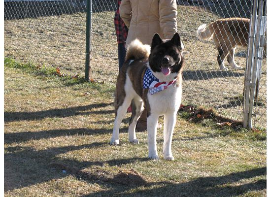 Boomer at 7 months (Ch. Slider x Dolce) adored by Todd & Angie Van Wyk in Iowa.