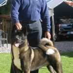 Jordan a Ch. Rumor x Ch. Star pup lives in Mexico.  He is litter brother to Stella, Kayden, Gabe and Bellatrix