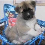 Manny puppy