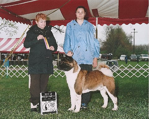 Rocco a Ch. Rumor X Zoe son, is loved by Cheryl Vencel and her daughters in Indiana.