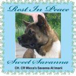 Ch. CR Wicca's Savanna at Imarii
